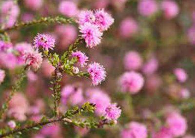 Flowers #2